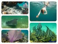 great snorkeling and diving opportunities