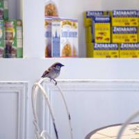 Breakfast with the birds - Cafe Beignet