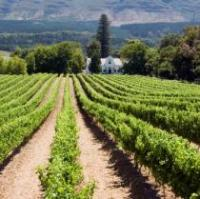 taste your way through wine country