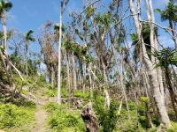 tree canopy loss and landslides