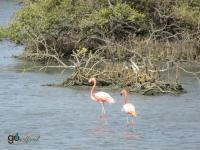 Bonaire's Flamingoes
