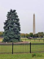 Washington Monument and National Christmas Tree
